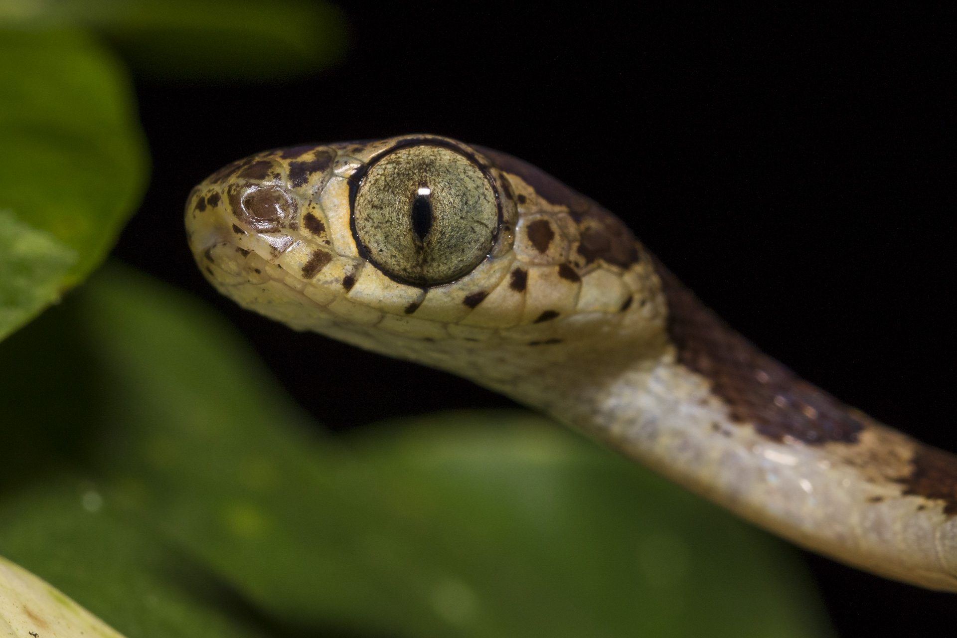 reptiles anaconda lodge ecuador