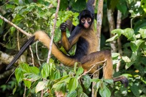 lodge ecuador turtle amazon rainforest tour amazonia monkey cebus