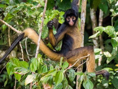 lodge ecuador turtle amazon rainforest tour amazonia monkey cebus